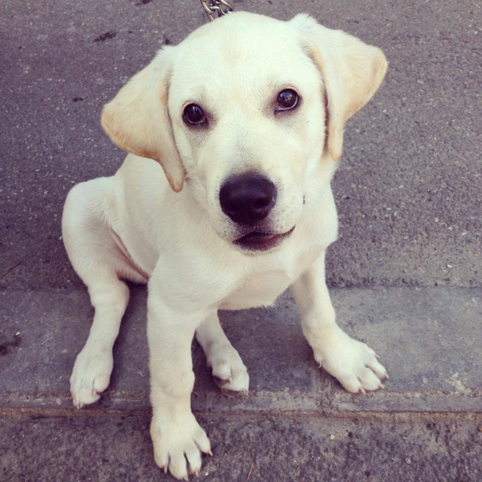 #nasthedog